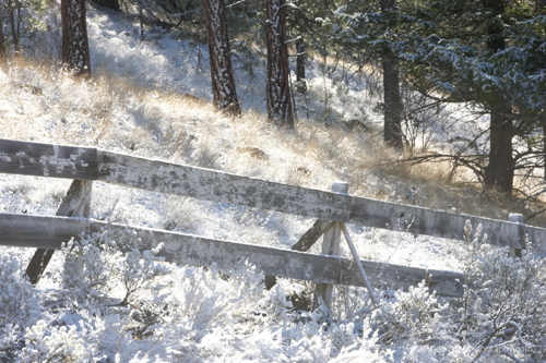 fence in a snowy woods