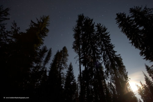 the stars and moon in the trees