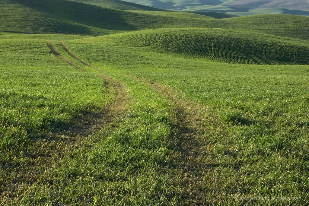 The road of inquiry can be followed strictly or loosely, like the tracks through this green field. It's up to you.
