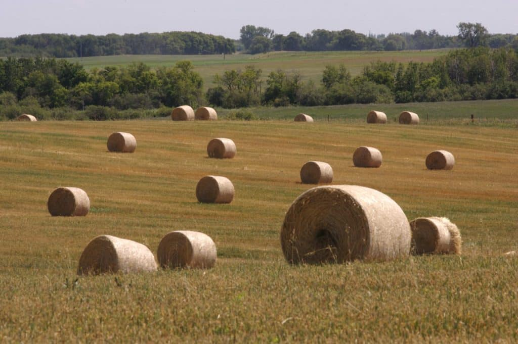 Field full of round hay bales